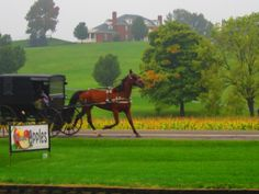 Beautiful scenery with amish horse and buggy