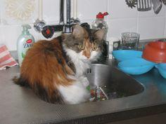 Even de afwas doen.