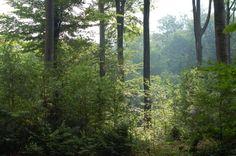 Ingezonden door VVD raadslid Nol Verhoeven: 'De Slangenburgse bossen waar het licht speelt met oude majestueuze beuken en hun zaailingen als voorbeeld van de diversiteit van deze prachtige plek. Beide foto's laten zien dat in een door mensen gevormde omgeving, of dat nu een gebouw, de landbouwgronden of de bossen betreft, er prachtige en inspirerende beelden ontstaan. Beelden die maken dat je vooral uitnodigen om even stil te staan, alles los te laten en te genieten.'