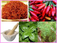 Vocabolario e utilizzo delle erbe in cucina Sweet And Spicy, Kitchen Hacks, Cooking Tips, Carrots, Salsa, Vegetables, Health, Food, Diet
