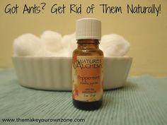 Ant Repellant. This blog lists several ways to get rid of ants. We found another way quite by accident last week. Just spray Febreze on them and they drop in their tracks! So far, they haven't returned.