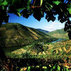Douro Portugal wines