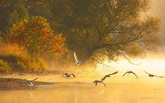 Aves niebla Ontario