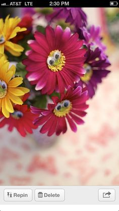 Love these daisies with eyes
