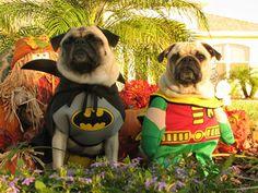 Batman and Robin pugs.