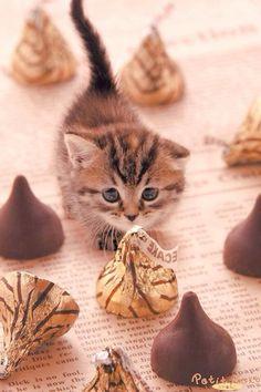 Kitten and Kisses!