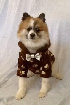 Pet Hoodie Brown/Paw Prints Fleece by LizzyAndMeekoShop on Etsy