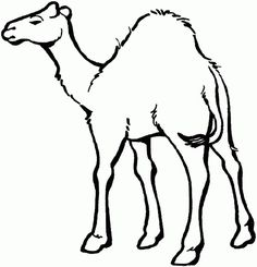 Printable Animal Baby Camel Coloring Page For Kids