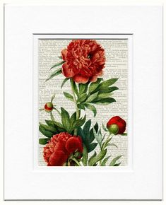 Hey, I found this really awesome Etsy listing at https://www.etsy.com/listing/56264344/peony-painting-printed-on-old-page-from