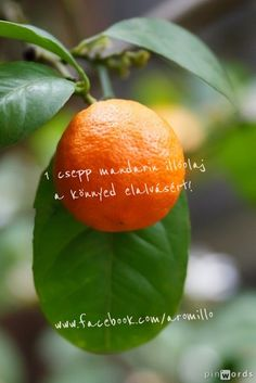 Mandarin illóolaj Citrus reticulata  ze essential oil 2 January