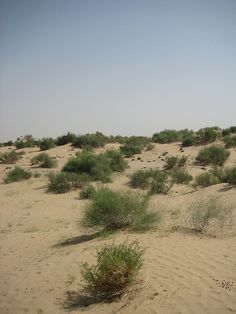 Cholistan Desert (Urdu, Saraiki:صحرائے چولستان), also locally known as Rohi (روہی) sprawls thirty kilometers from Bahawalpur, Punjab, Pakistan and covers an area of 26,300 km². It adjoins the Thar Desert extending over to Sindh and into India.