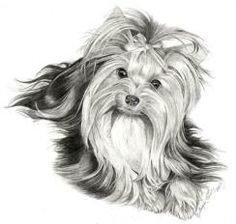 yorkie drawings | yorkie drawings - get domain pictures - getdomainvids.com