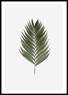 Palm leaf, poster in the group Posters & Prints / Sizes / 30x40cm | 11,8x15,7