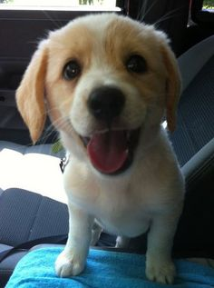 """""""Happiness is a warm puppy."""" -Charles M. Schulz   The 50 Happiest Animals In The Entire World"""