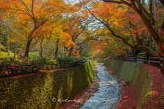 https://flic.kr/p/Bx6WzC | Autumn in the Maple Gardens of Kitano Tenman-gū in Kyoto. | Yesterday, I ventured out to Kitano Tenman-gū  (北野天満宮) in Kyoto, to enjoy the maple colours in their maple garden. It was a little disappointing because there was still quite a few green leaves and that vivid reddish brown wasn't there. This is the Tenjin River (天神川) that flows through the maple garden.
