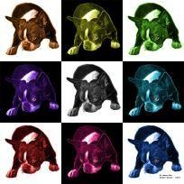 Mosaic Boston Terrier Dog Pop Art - v2 8384