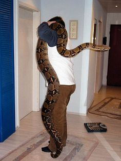 Boa Constrictor - this female is probably the largest kept in captivity in Germany. She was born in 1997 and is weighing 30kg, (60 pounds).The ancestors were from Columbia. Such a size can only be achieved by feeding guinea pigs and rabbits. Photo: Stefan Strebl.
