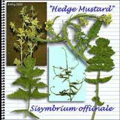 edible plant list for tortoises