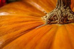 Close up zucca Zucca, zucca zucca! Come coltivarla, come curarla, quali specie esistono e come scegliere la migliore.