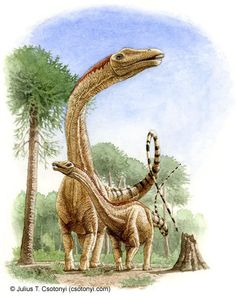 Named after businessman and philanthropist Andrew Carnegie, Diplodocus carnegii, with its long, flexible neck and tail, is one of the longes… | Julius T. Csotonyi