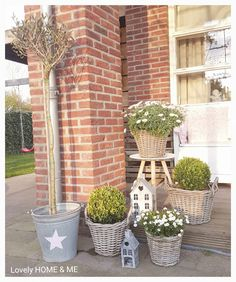 New plants and flowers! 💗 love it!!! #plants #flowersathome #flowers #flowerdecor #garden #gardeninspirations #bloemen #bloemeninhuis #tuin #tuininspiratie #love