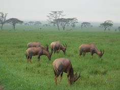 The Serengeti Nairobi, Africa, Animals, Animales, Animaux, Animal, Animais