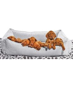 Urban Lounger bed from Bowsers . Does not come filled with Cute Vizsla Puppies ! LOL !
