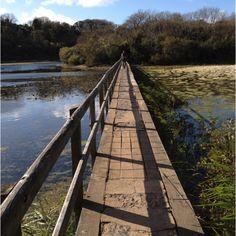 Bosherston, Pembrokeshire, West Wales