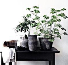 19 sätt att förvandla ditt hem på – med växter - Metro Mode