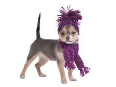 """Dicen """"que perro tan ridículo"""" pero el perro no piensa, más bien deben decir """"que dueño tan ridículo que vistió a su perro"""""""