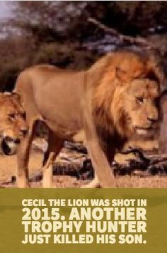 #animals #cecil #lion #hunter #trophy #hunting