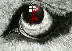 Red in the eye of the wolf