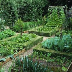 Potager as series of box-edged beds                                                                                                                                                                                 More