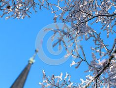 Winter Day,a Snow-covered Tree Branches Against The Blue Sky. Stock Photo - Image of flora, scenics: 83435066 Winter Background, Winter Day, Tree Branches, Flora, Snow, Stock Photos, Seasons, Celestial, Image