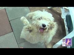 Look at these funny doggies, It seems that they are dancing! Funny Home Videos, Pet Videos, Funny Animal Videos, Funny Animals, A Funny, Funny Cats, In A Heartbeat, Cute Puppies, Doggies