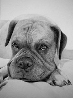 Custom Pet Portrait - Original Pencil Drawing From Your Photo - Choose your size! on Etsy, $15.00