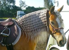 Such a patient horse for such a beautiful mane.