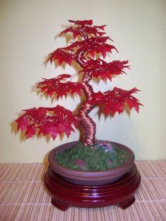 Bonsai red Tree