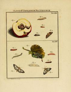 D.1,pt.2 - De natuurlyke historie der insecten; - 1764 Biodiversity Heritage Library