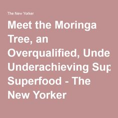Meet the Moringa Tree, an Overqualified, Underachieving Superfood - The New Yorker Superfoods, Food Staples, The New Yorker, Fitness Tips, Meet, Healthy, Climate Change, Garden Ideas, Organic