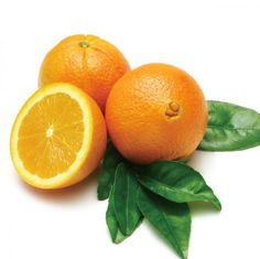 Navel Orange Tree for Sale
