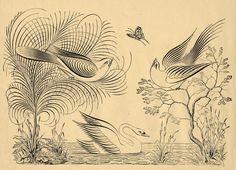 Penmanship - ornamental bird flourishes.
