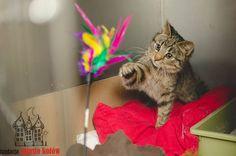 Rico is looking for a home ... #cute #cutecats #cats #caturday #kot #koty #neko #gato #katz #katzen #kittens #chat