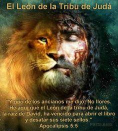 pictures of jesus as lion of judah - Bing images Lion Pictures, Jesus Pictures, Bible Pictures, Jesus Art, Jesus Christ, Lion Of Judah Jesus, Lion And Lamb, Tribe Of Judah, Prophetic Art