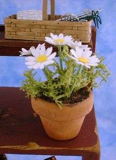 Miniature Daisies & Other Flowers Project