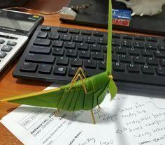 Grasshopper Coconut Leaves, Locs, Maldives, Palm, Creative, Instagram, The Maldives, Dreads, Locomotive