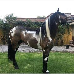 Stunning and unusual horse Most Beautiful Horses, All The Pretty Horses, Beautiful Horse Pictures, Beautiful Dream, Rare Horses, Wild Horses, Black Horses, Beautiful Creatures, Animals Beautiful