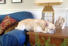 Sherman loves to nap in the oddest places...