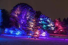 ILLUMINATION: Tree Lights at The Morton Arboretum + GIVEAWAY! - Me ...