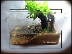 My Mini Mangrove - Nano Aquariums - Aquatic Plant Central